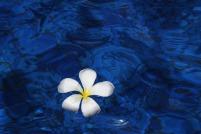 flower-1203563_960_720