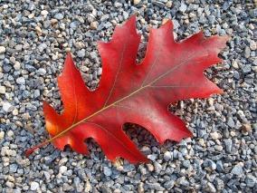 autumn-842063_960_720