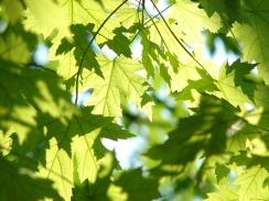 leaves-291024_960_720