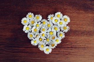 daisy-1403041_1280