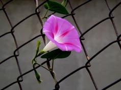 flower-974917_1280