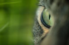 cats-eye-1407865_1280