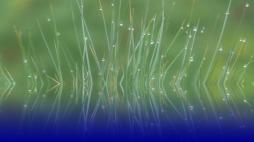 grass-2005927_960_720