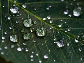 leaf-1030870_1280