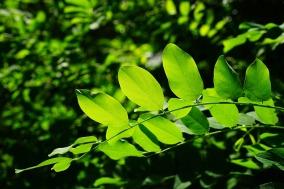 leaves-829513_1280