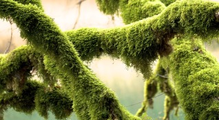green-675840_1280